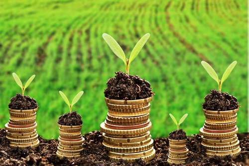 Why Startups Are Going Green